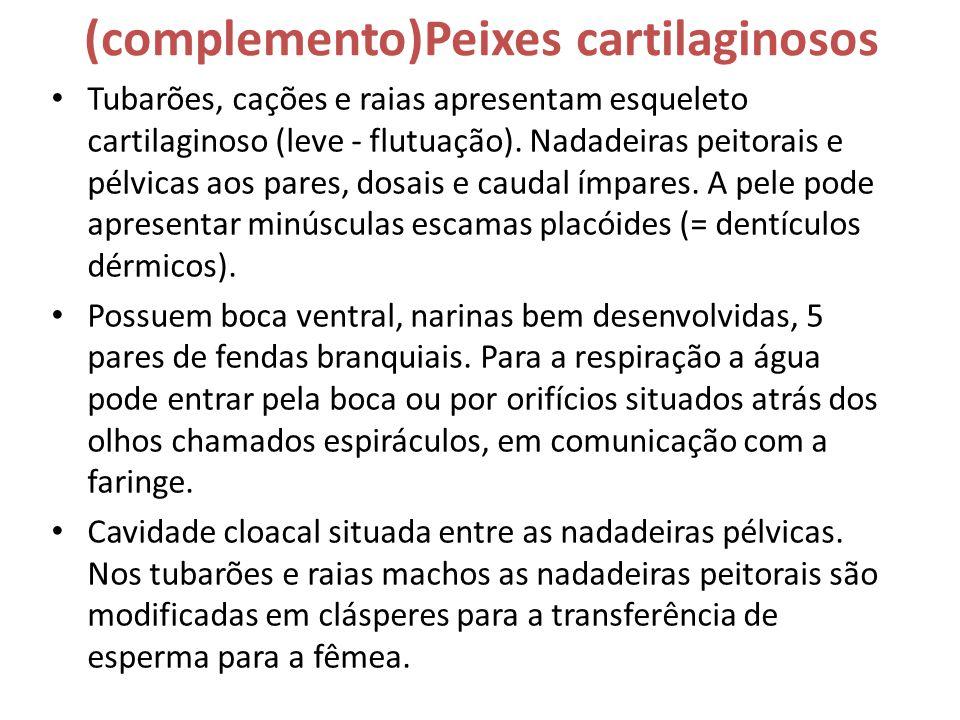 (complemento)Peixes cartilaginosos