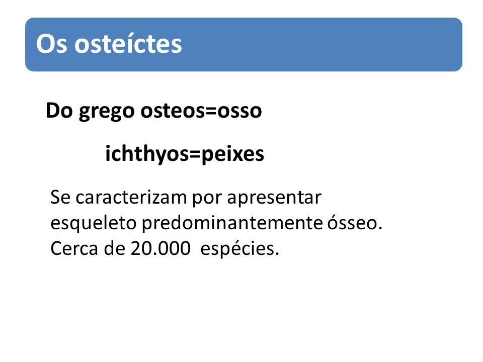 Do grego osteos=osso ichthyos=peixes Se caracterizam por apresentar