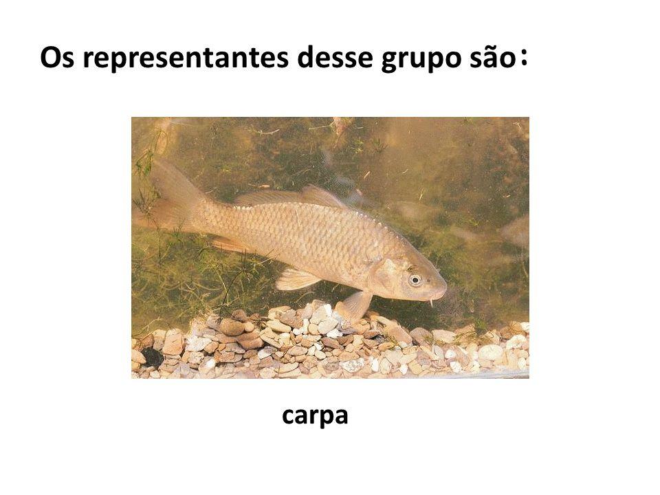 Os representantes desse grupo são: