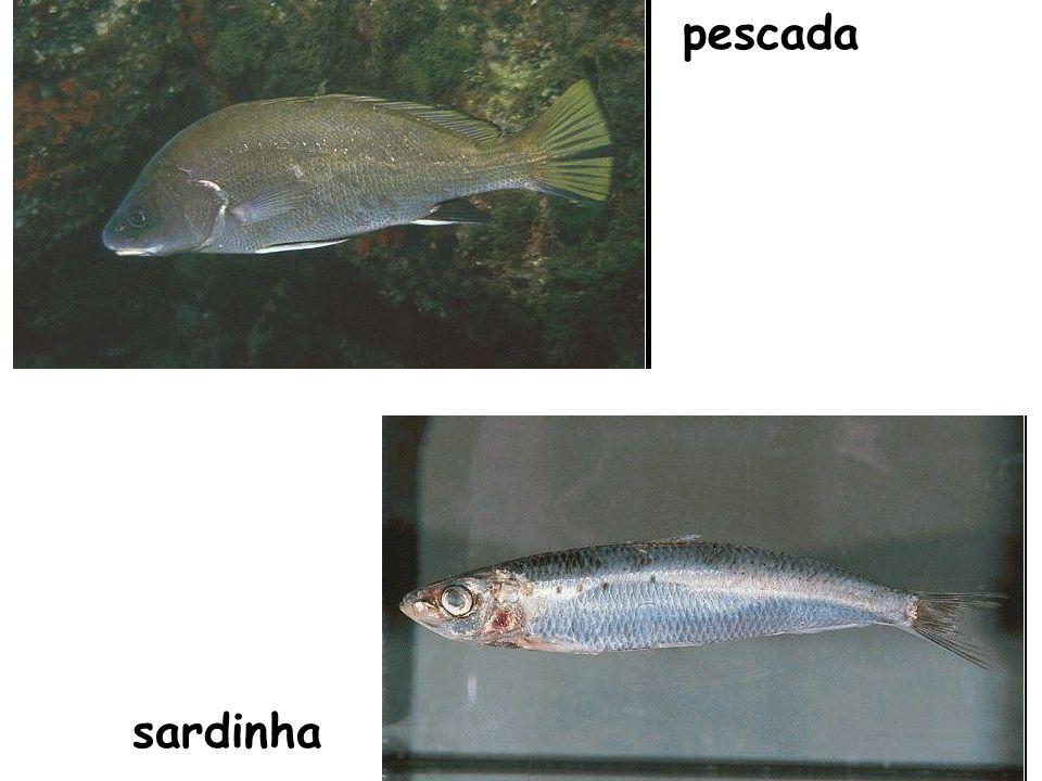 pescada sardinha
