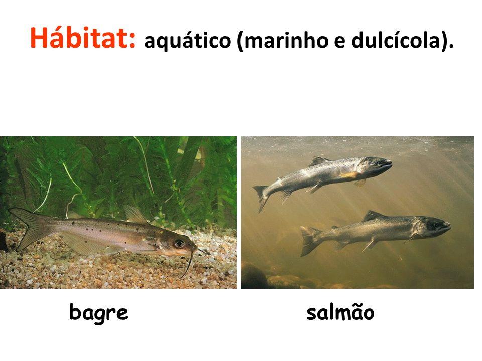 Hábitat: aquático (marinho e dulcícola).