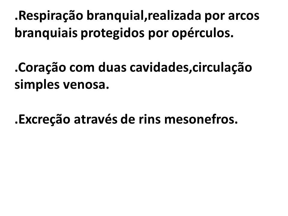 .Respiração branquial,realizada por arcos branquiais protegidos por opérculos.