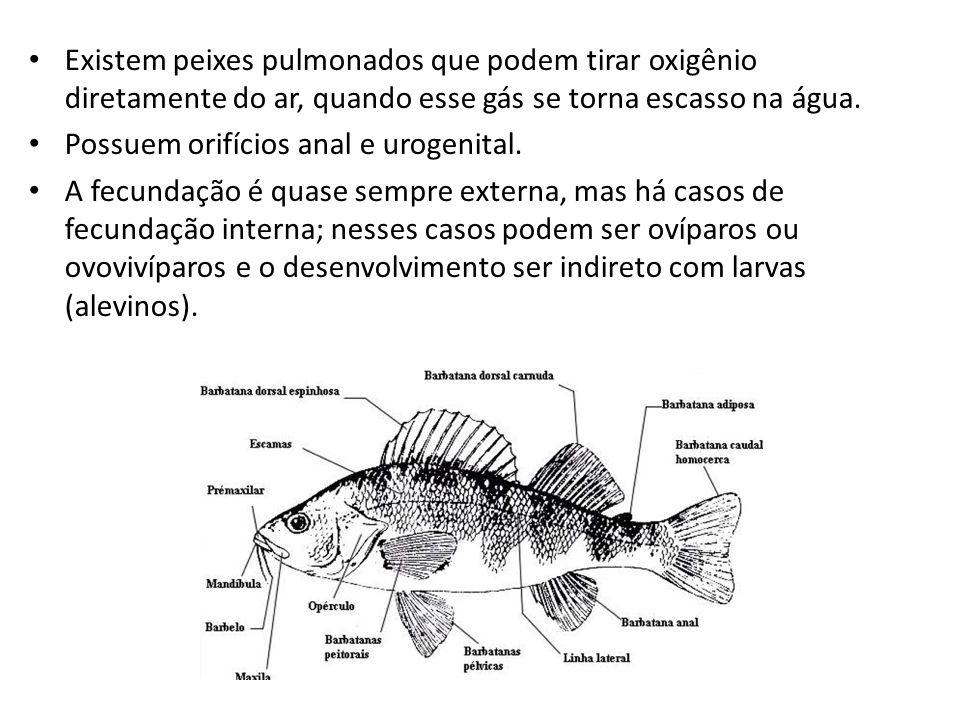 Existem peixes pulmonados que podem tirar oxigênio diretamente do ar, quando esse gás se torna escasso na água.