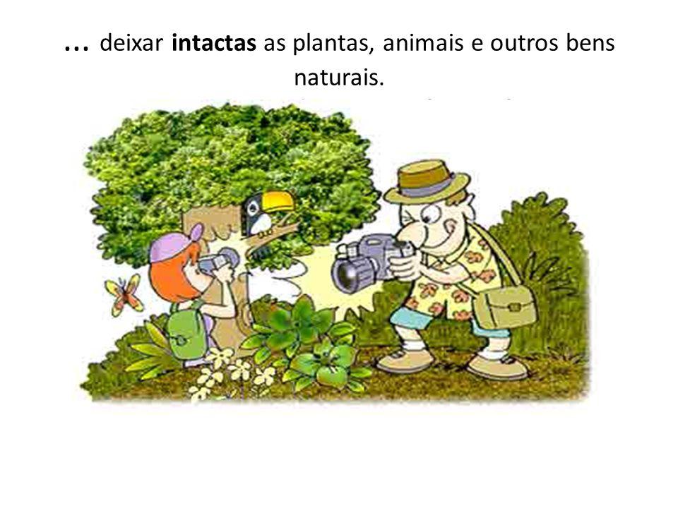 deixar intactas as plantas, animais e outros bens naturais