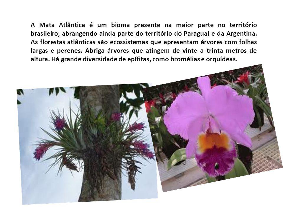 A Mata Atlântica é um bioma presente na maior parte no território brasileiro, abrangendo ainda parte do território do Paraguai e da Argentina.