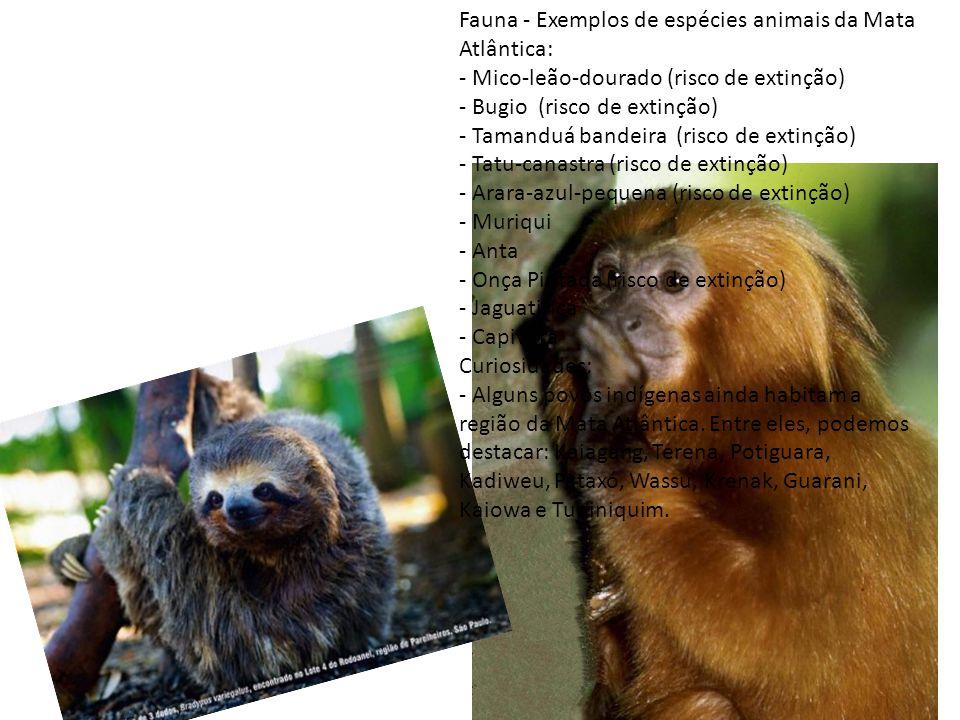 Fauna - Exemplos de espécies animais da Mata Atlântica: