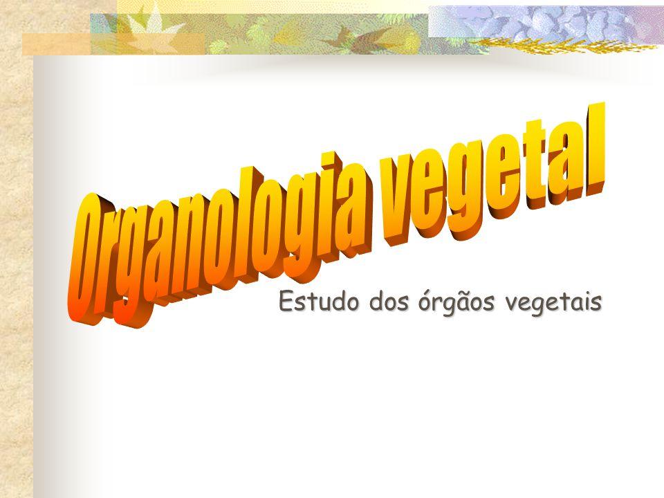 Estudo dos órgãos vegetais