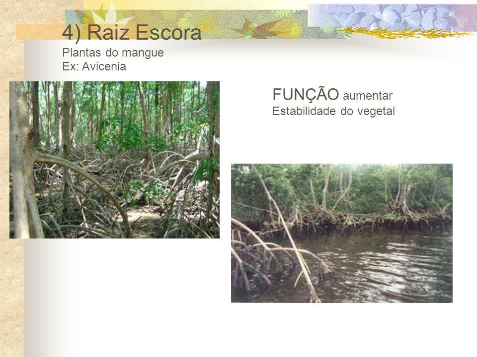 4) Raiz Escora FUNÇÃO aumentar Plantas do mangue Ex: Avicenia