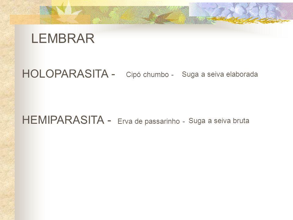 LEMBRAR HOLOPARASITA - HEMIPARASITA - Cipó chumbo -