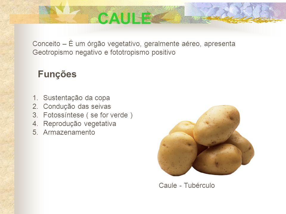 CAULE Conceito – É um órgão vegetativo, geralmente aéreo, apresenta. Geotropismo negativo e fototropismo positivo.
