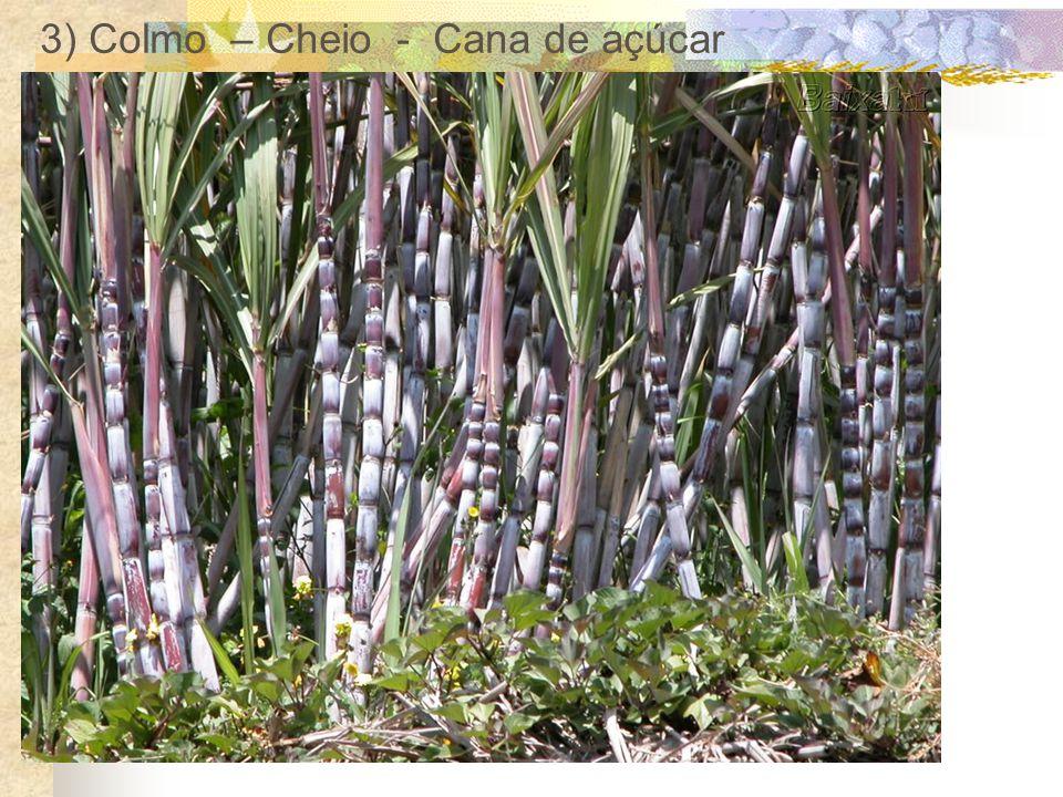 3) Colmo – Cheio - Cana de açúcar