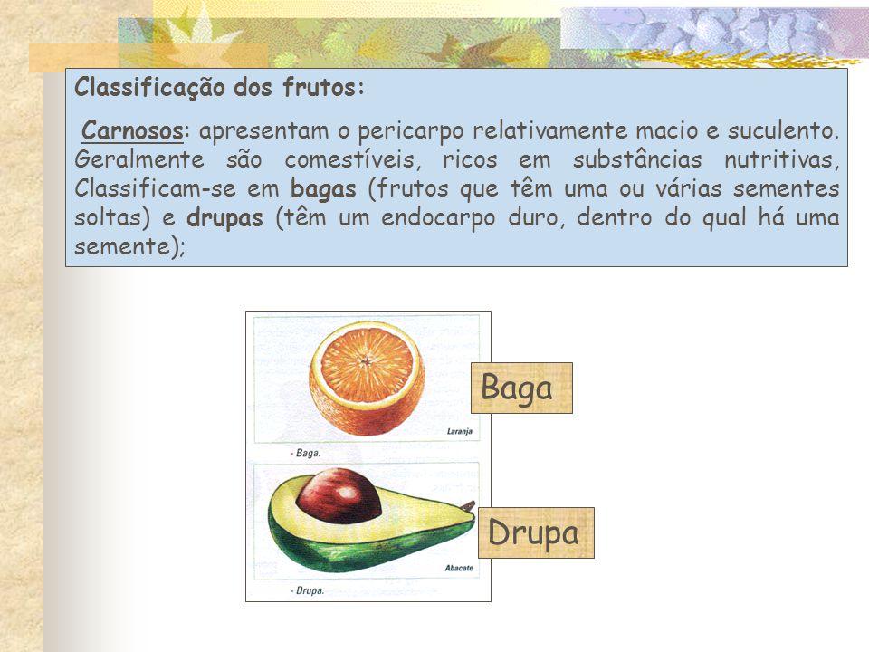 Baga Drupa Classificação dos frutos: