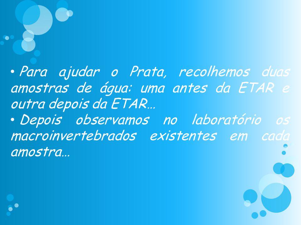 Para ajudar o Prata, recolhemos duas amostras de água: uma antes da ETAR e outra depois da ETAR…