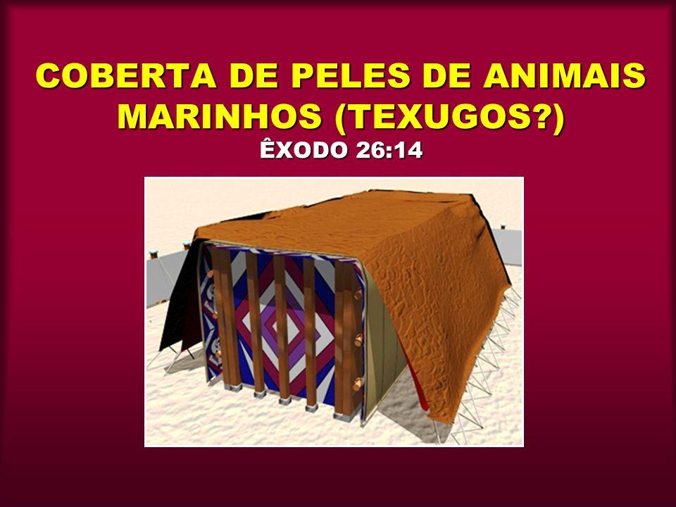 COBERTA DE PELES DE ANIMAIS MARINHOS (TEXUGOS ) ÊXODO 26:14