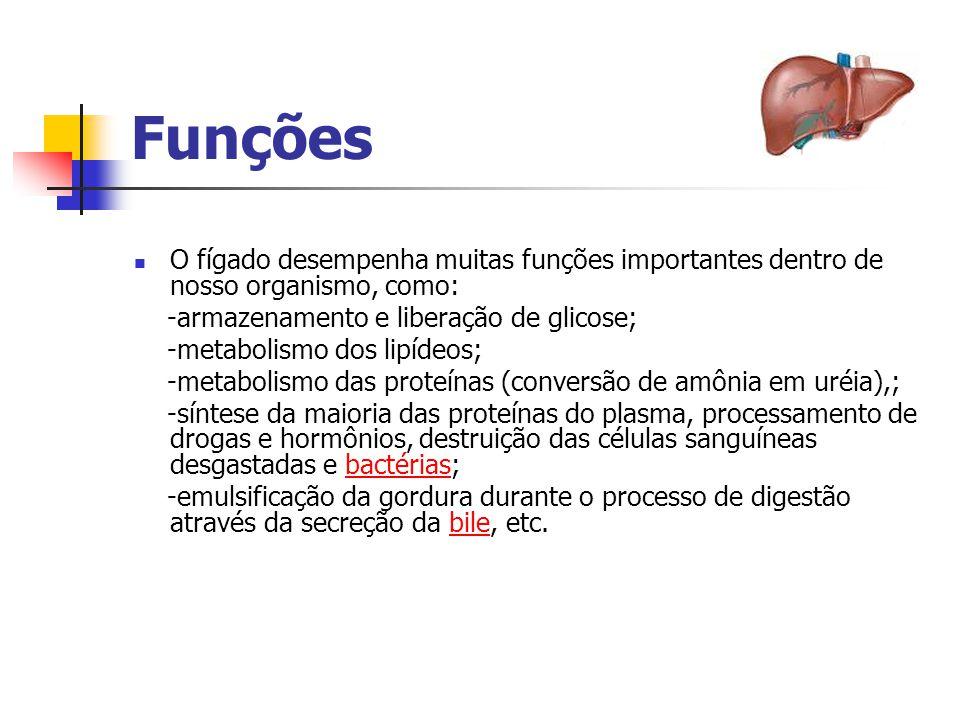 Funções O fígado desempenha muitas funções importantes dentro de nosso organismo, como: -armazenamento e liberação de glicose;