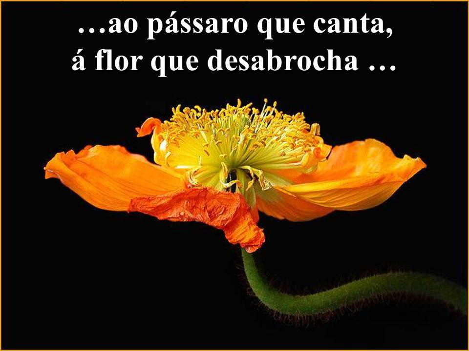 …ao pássaro que canta, á flor que desabrocha …