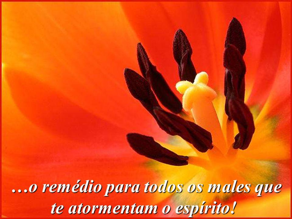 …o remédio para todos os males que te atormentam o espírito!