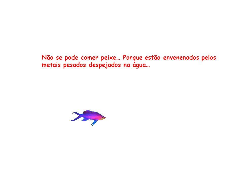 Não se pode comer peixe… Porque estão envenenados pelos