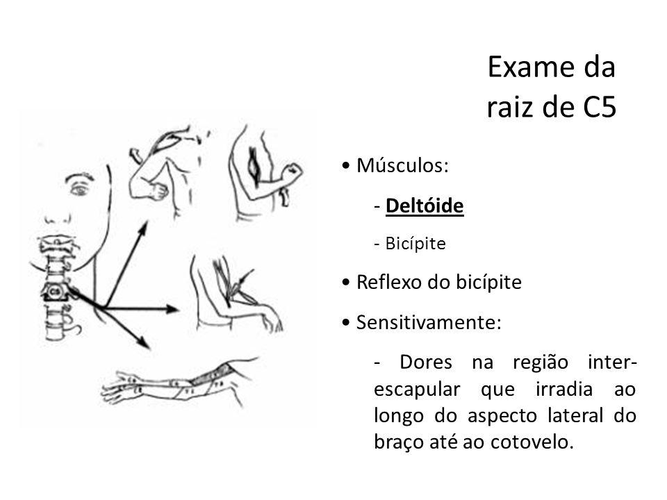 Exame da raiz de C5 Músculos: Deltóide Reflexo do bicípite