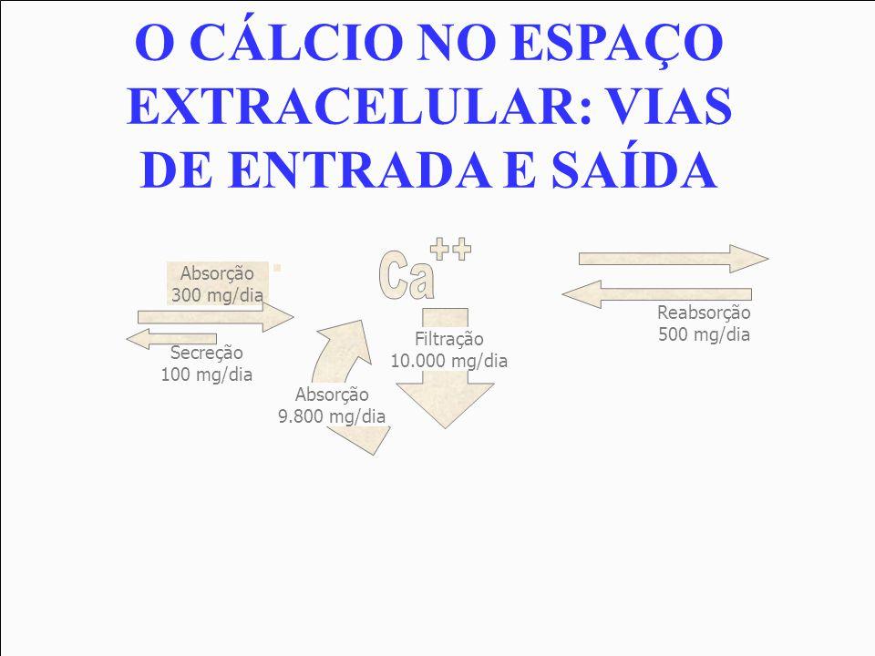 O CÁLCIO NO ESPAÇO EXTRACELULAR: VIAS DE ENTRADA E SAÍDA