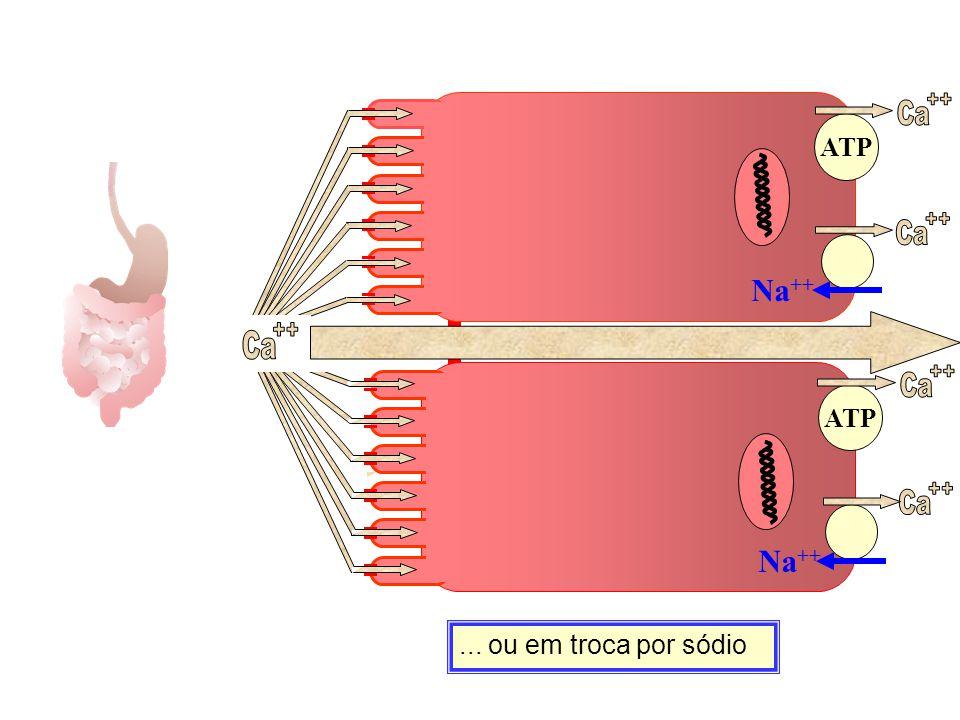 ++ Ca ++ Ca ++ Ca ++ Ca ++ Ca Na++ Na++ ATP ATP