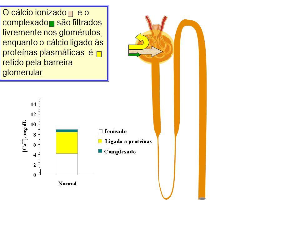 O cálcio ionizado e o complexado são filtrados livremente nos glomérulos, enquanto o cálcio ligado às proteínas plasmáticas é retido pela barreira glomerular