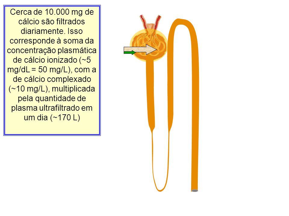 Cerca de 10. 000 mg de cálcio são filtrados diariamente