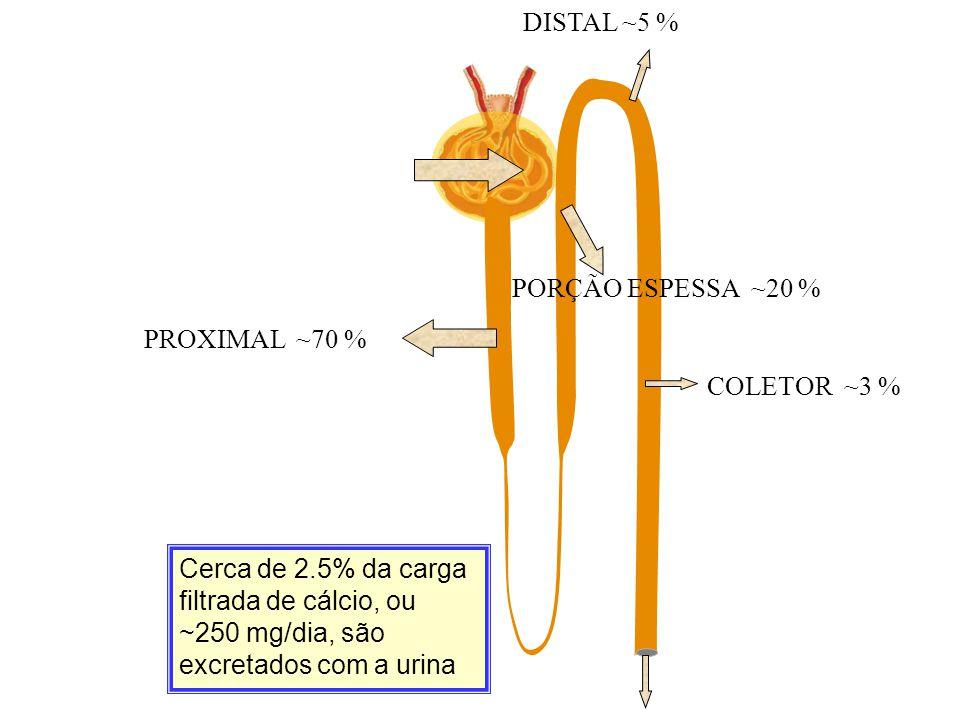 DISTAL ~5 % PORÇÃO ESPESSA ~20 % PROXIMAL ~70 % COLETOR ~3 %