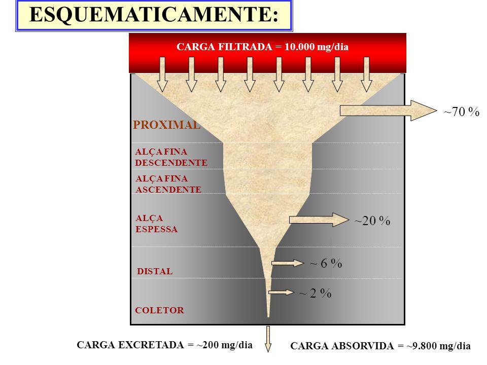 ESQUEMATICAMENTE: ~70 % ~20 % ~ 6 % ~ 2 % PROXIMAL