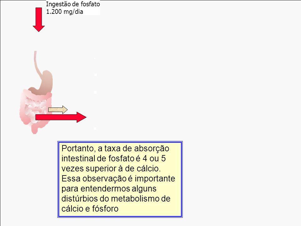 Ingestão de fosfato 1.200 mg/dia. Incorporação. 500 mg/dia. Reabsorção500 mg/dia. Filtração. 10.000 mg/dia.