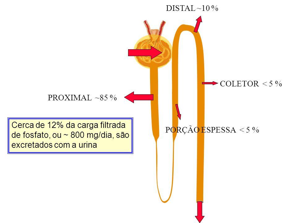 DISTAL ~10 % COLETOR < 5 % PROXIMAL ~85 % PORÇÃO ESPESSA < 5 %