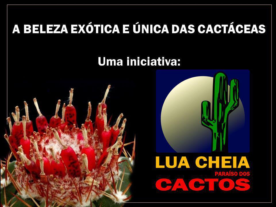 A BELEZA EXÓTICA E ÚNICA DAS CACTÁCEAS