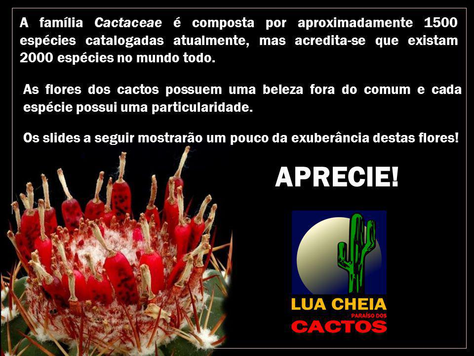 A família Cactaceae é composta por aproximadamente 1500 espécies catalogadas atualmente, mas acredita-se que existam 2000 espécies no mundo todo.