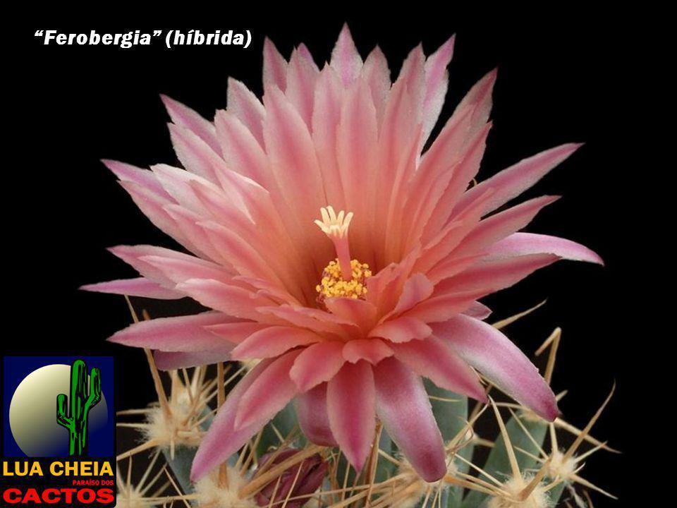Ferobergia (híbrida)
