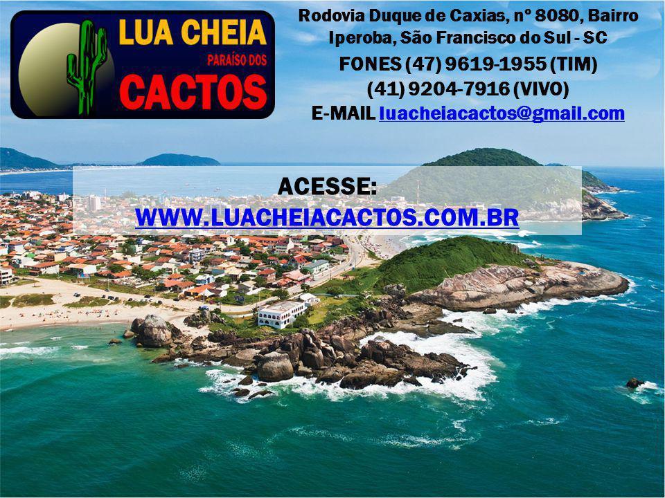 E-MAIL luacheiacactos@gmail.com