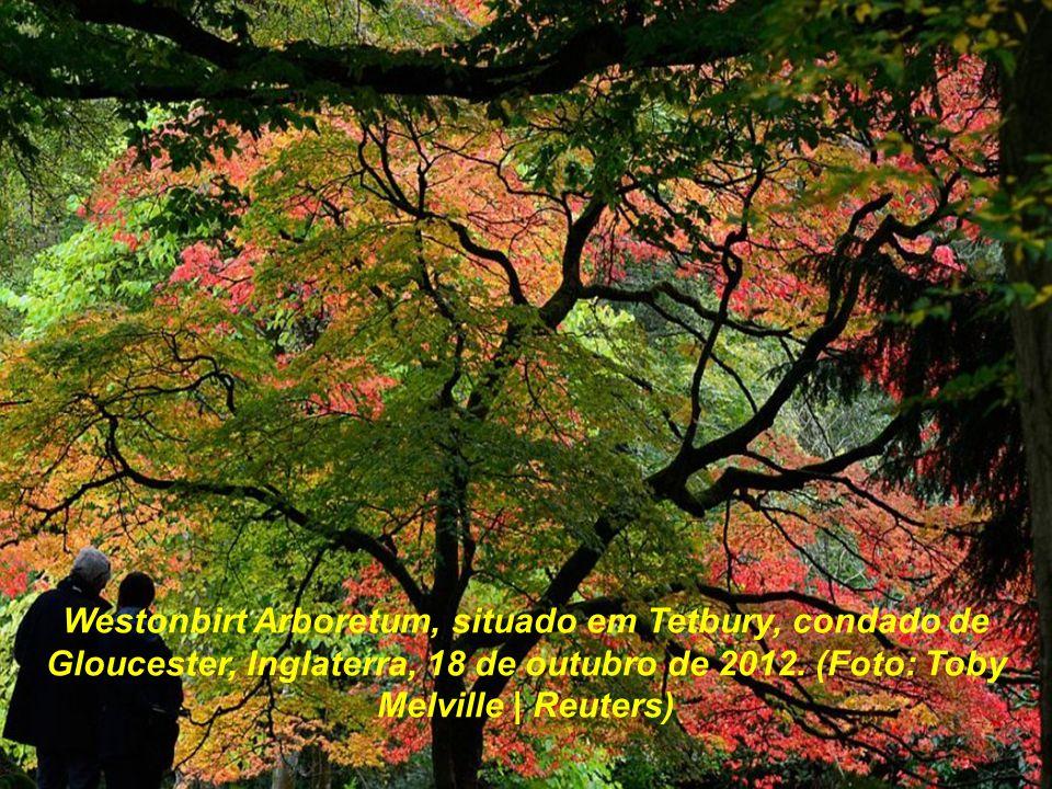 Westonbirt Arboretum, situado em Tetbury, condado de Gloucester, Inglaterra, 18 de outubro de 2012.
