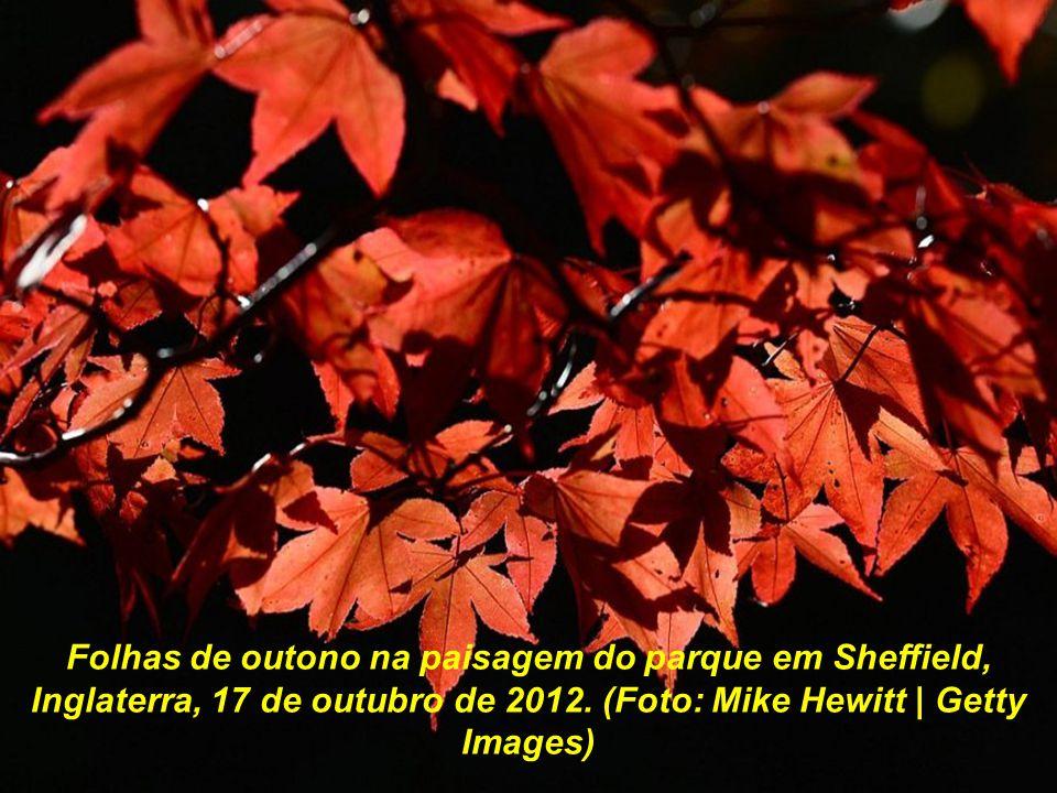 Folhas de outono na paisagem do parque em Sheffield, Inglaterra, 17 de outubro de 2012.