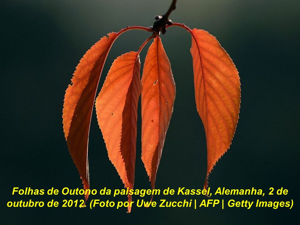 Folhas de Outono da paisagem de Kassel, Alemanha, 2 de outubro de 2012