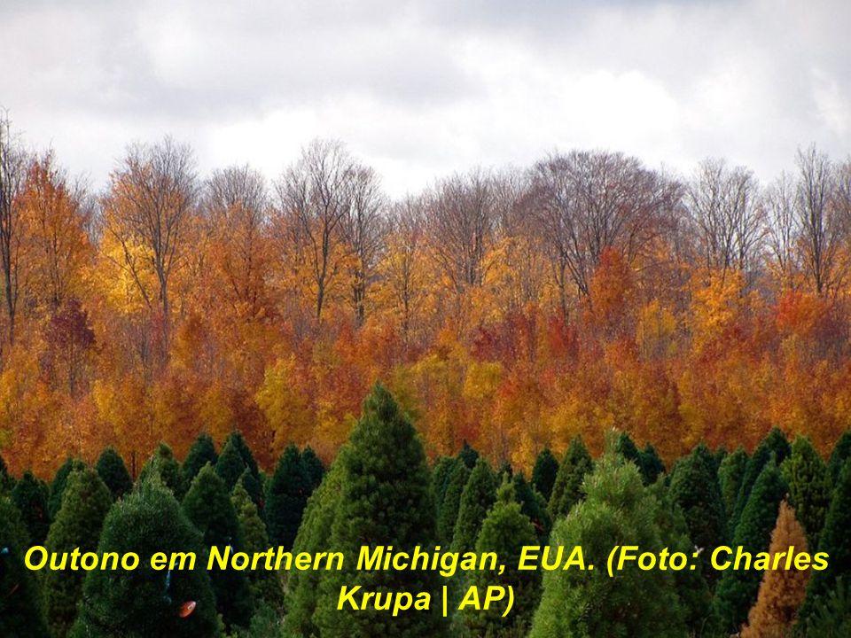 Outono em Northern Michigan, EUA. (Foto: Charles Krupa | AP)