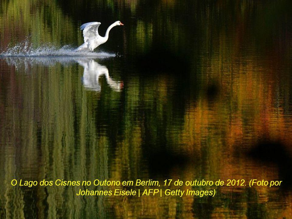 O Lago dos Cisnes no Outono em Berlim, 17 de outubro de 2012