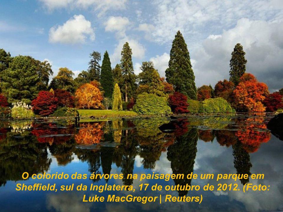 O colorido das árvores na paisagem de um parque em Sheffield, sul da Inglaterra, 17 de outubro de 2012.