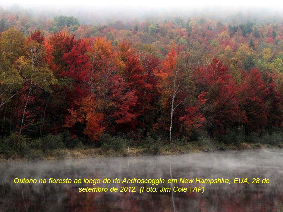 Outono na floresta ao longo do rio Androscoggin em New Hampshire, EUA, 28 de setembro de 2012.