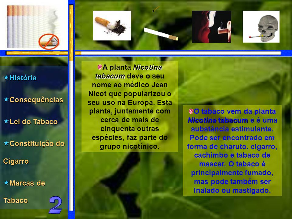 A planta Nicotina tabacum deve o seu nome ao médico Jean Nicot que popularizou o seu uso na Europa. Esta planta, juntamente com cerca de mais de cinquenta outras espécies, faz parte do grupo nicotínico.