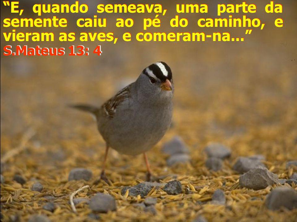 E, quando semeava, uma parte da semente caiu ao pé do caminho, e vieram as aves, e comeram-na...