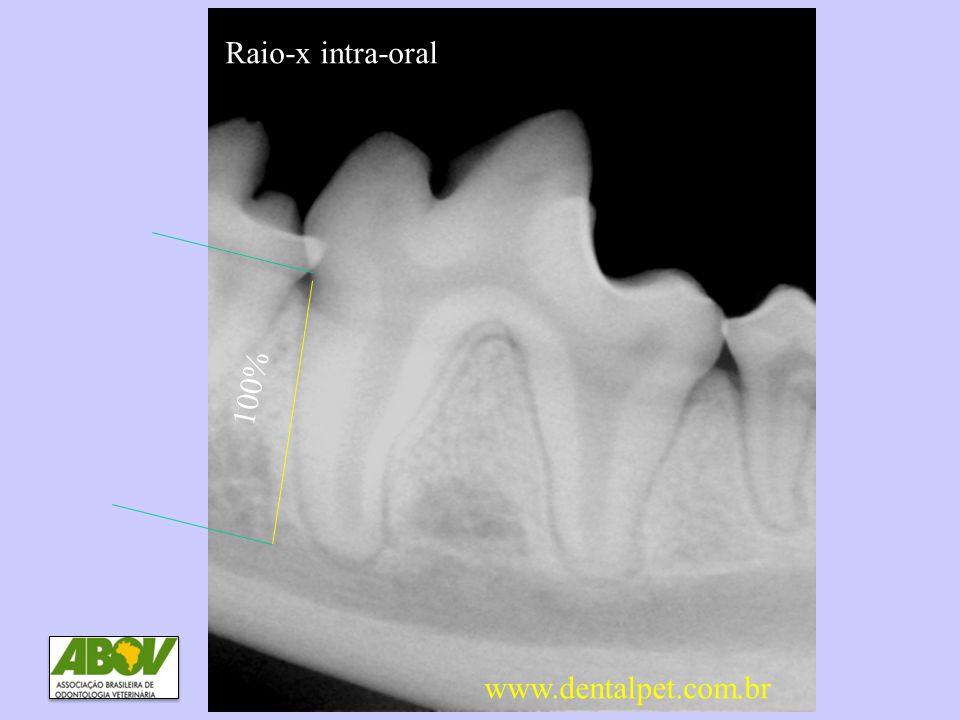 Raio-x intra-oral DP0 e DP1 Sem perda óssea 100% www.dentalpet.com.br