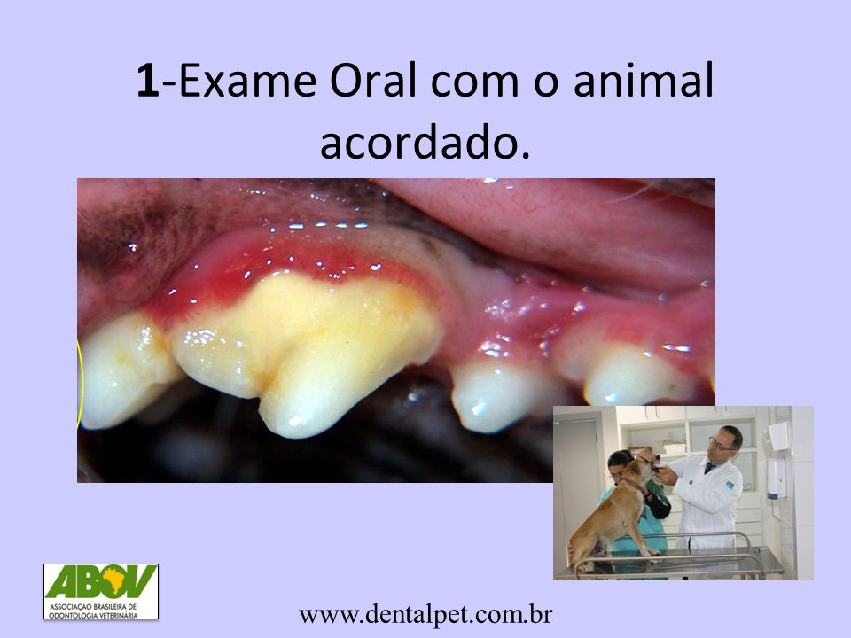 1-Exame Oral com o animal acordado.