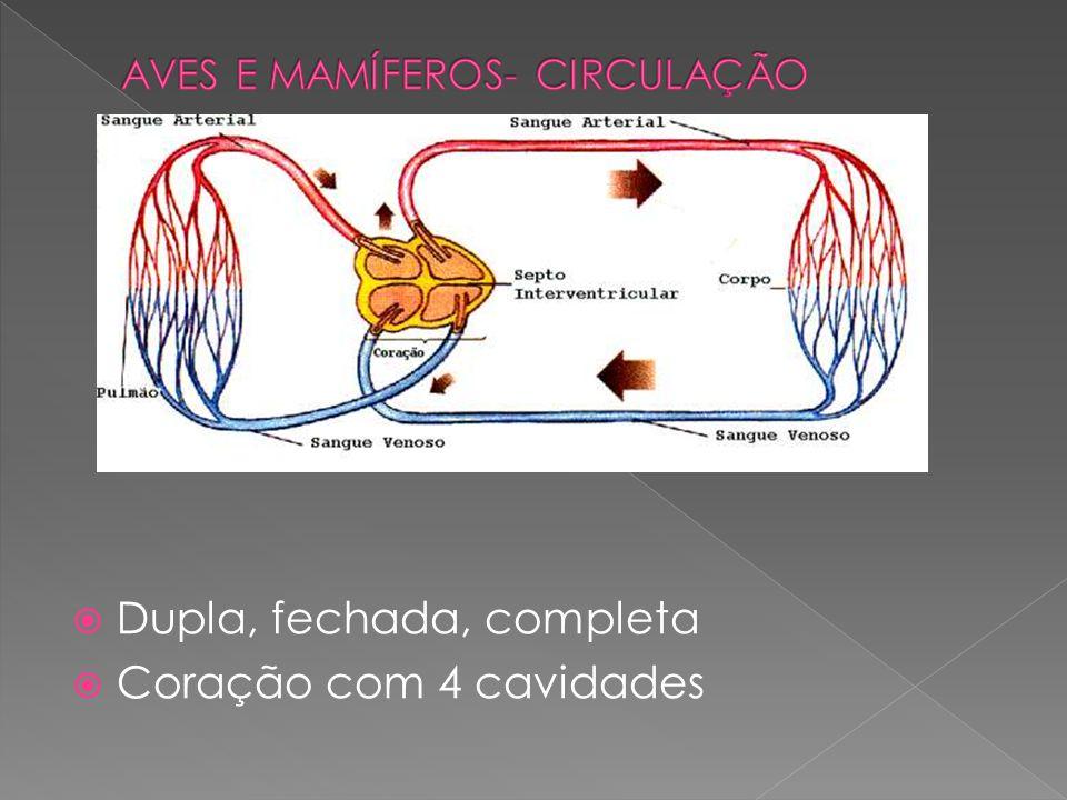 AVES E MAMÍFEROS- CIRCULAÇÃO