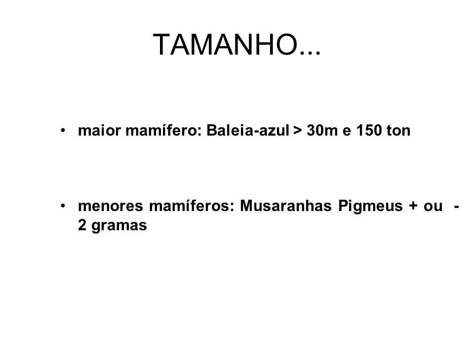 TAMANHO... maior mamífero: Baleia-azul > 30m e 150 ton