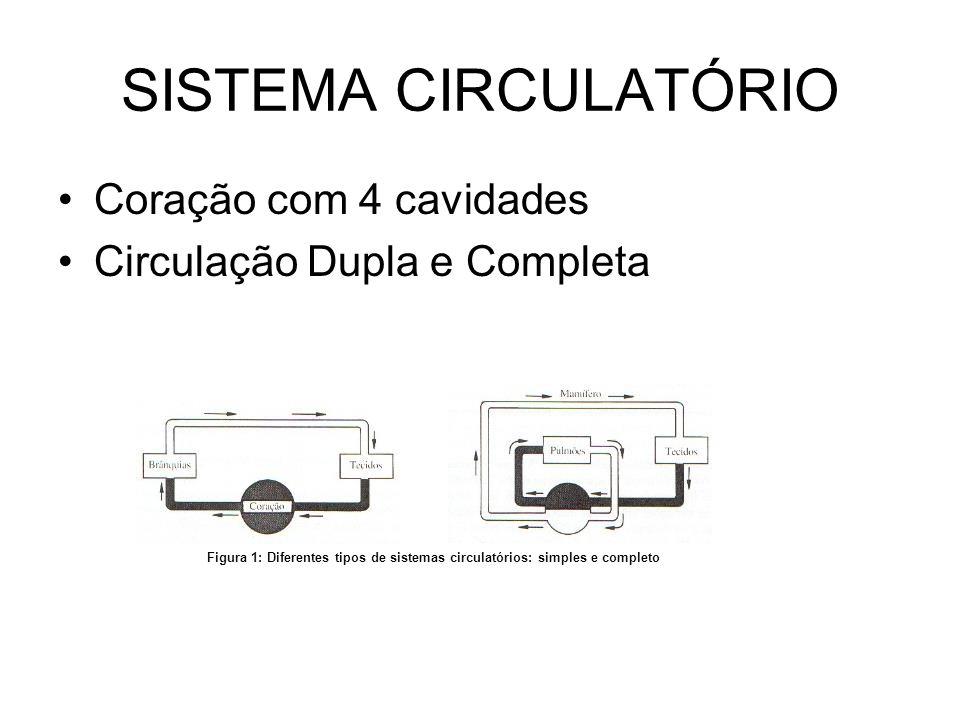 SISTEMA CIRCULATÓRIO Coração com 4 cavidades
