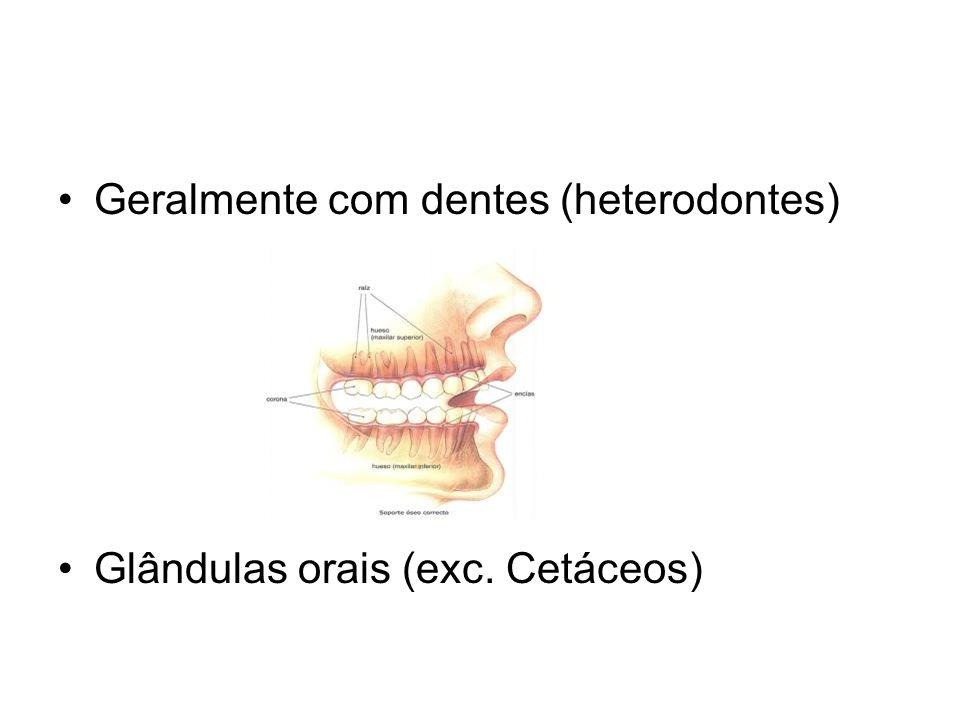Geralmente com dentes (heterodontes)